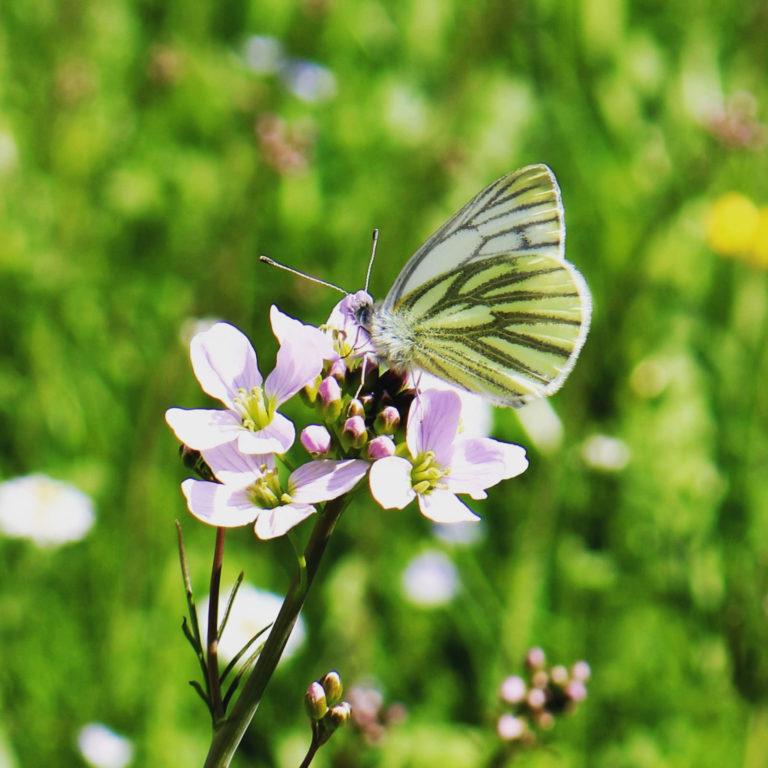 Coaching bei Anna Kohlhund Schmetterling